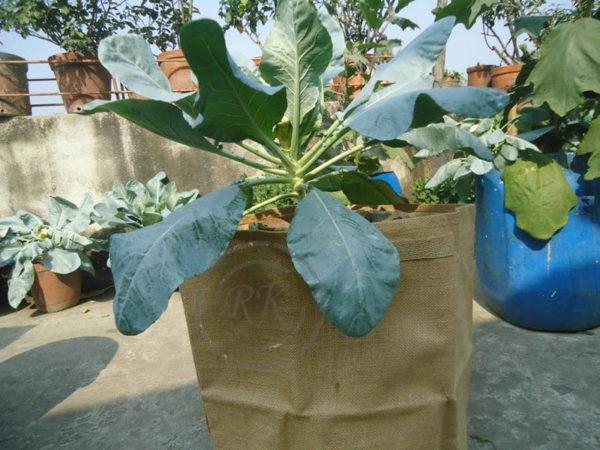 Jute Season Grow Bags