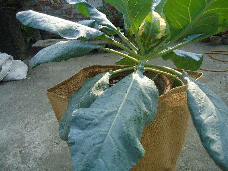 jute grow bag season vegetables