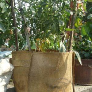 Jute Grow Season Bags
